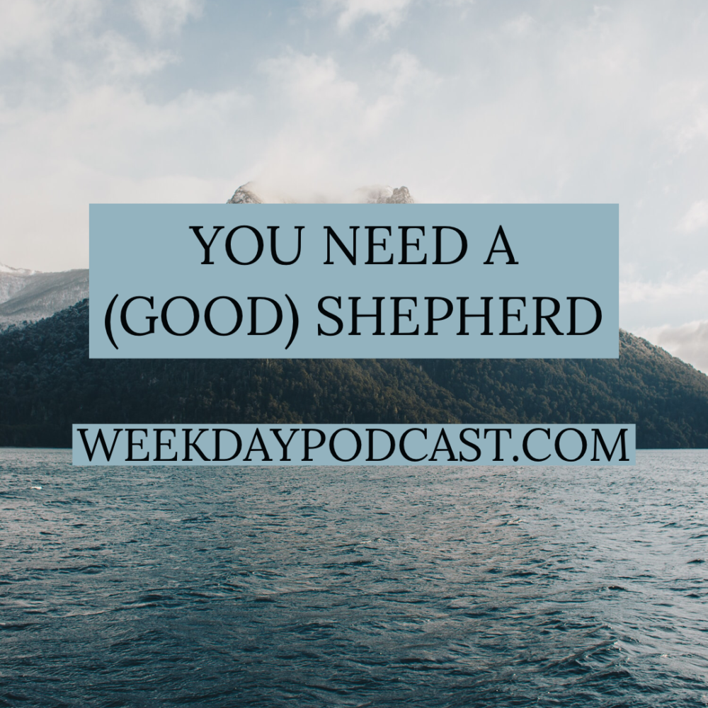You Need a (Good) Shepherd Image